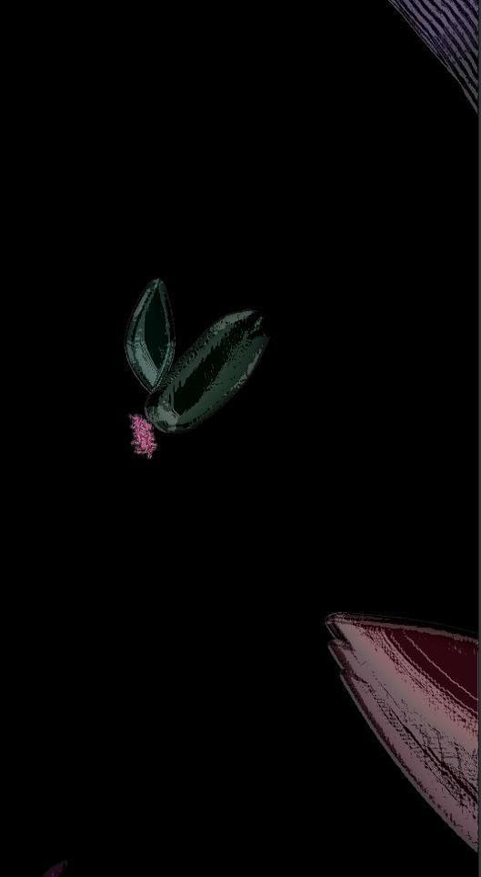 bie_butterfly.JPG