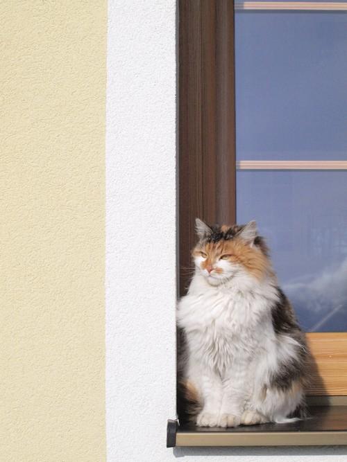 soft_kitty.jpg