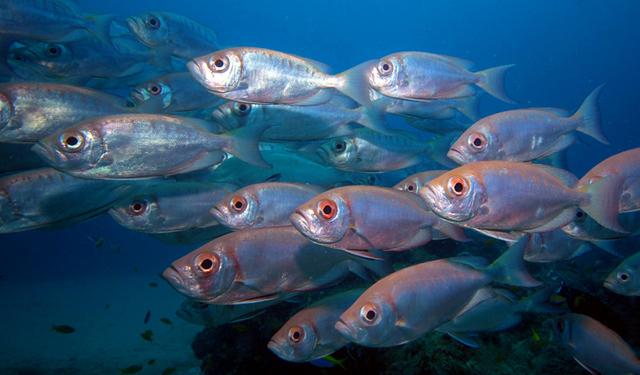 proplouvat mezi hejny ryb je zážitek