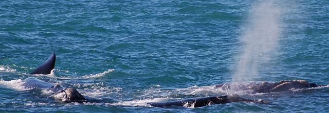 Skupina velryb