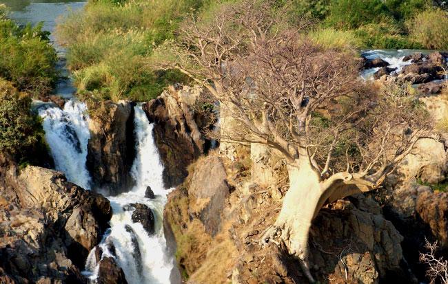 baobab na Epupa Falls