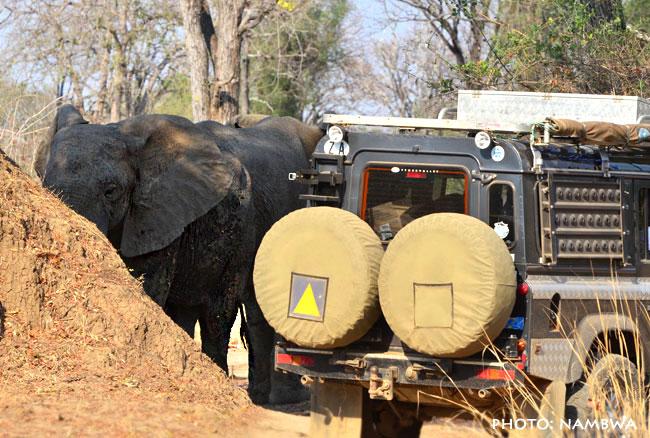 setkání se slony