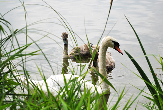 Obrazem: Počernický rybník. Blog - Monika Al-Anni (blog.iDNES.cz)
