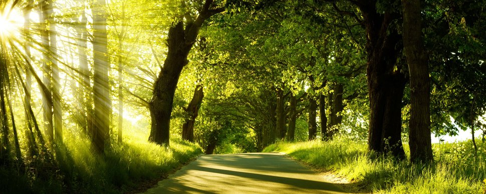 3614__green-nature-dual-monitor_p.jpg