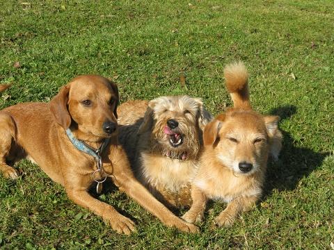 Já dáma Kelly uprostřed, vlevo Alfík, vpravo Fox