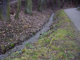 Lysolajský potok pod pramenem.jpg