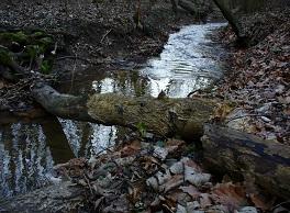Kopaninský potok v lese.jpg