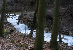 Zamrzlý potok v lese.png