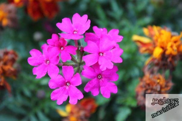 fialove-kvetinky.jpg