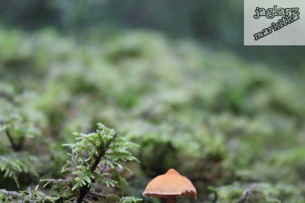 houba-destnik.jpg