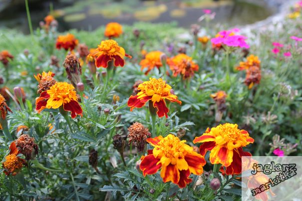 oranzove-kvetinky.jpg