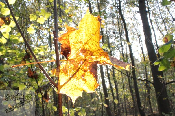 ceska-priroda-slunecny-zluty-list.jpg