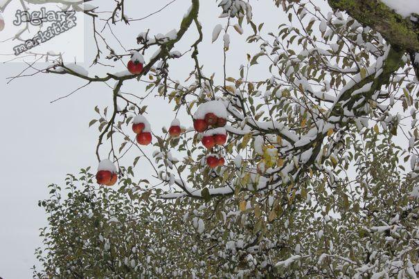 jablicka-pod-snehem.jpg