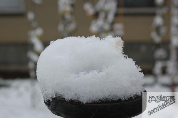vlockova-snehova-jednohubka.jpg