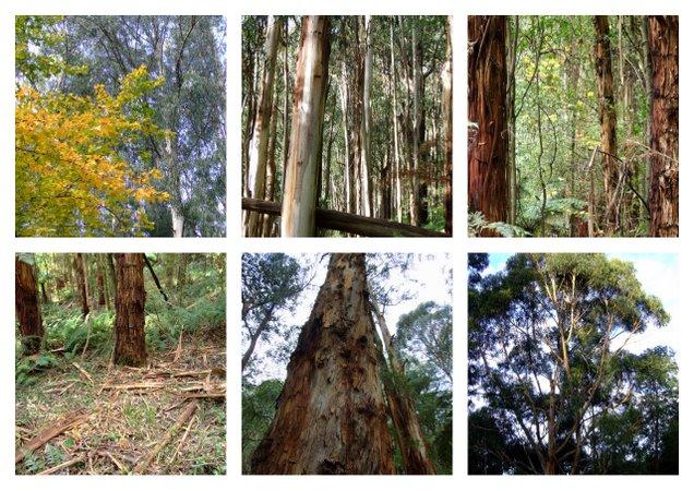 stromy.jpg