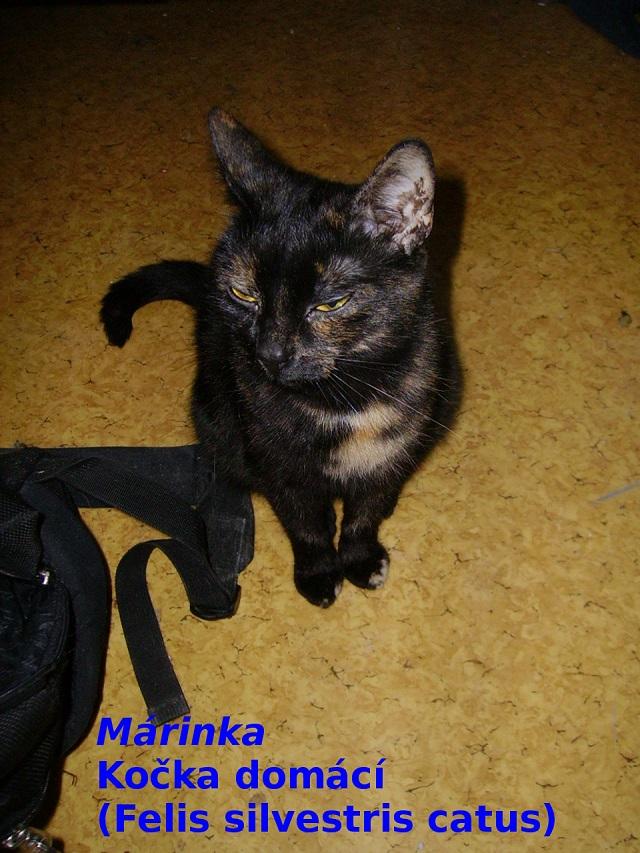 Kočka domácí - Márinka