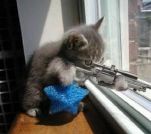 Kočka odstřelovač