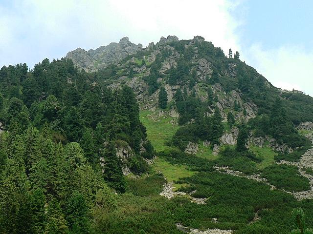 Dřeviny v Tatrách