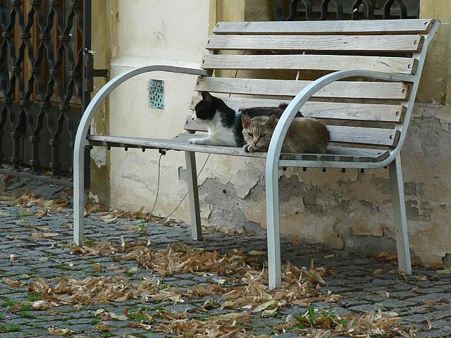 Boleslavský hrad, kočky na lavičce.