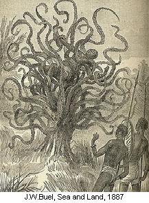 strom_lidozrout_1.jpg
