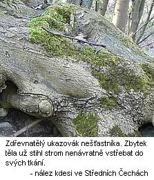 strom_lidozrout_2.jpg