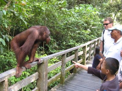 Orangutaní rezervace Sepilok