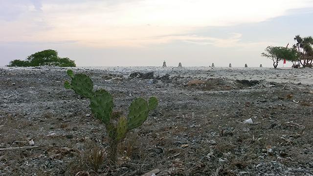 """Osamělý kaktus v ostrovním """"vnitrozemí"""""""