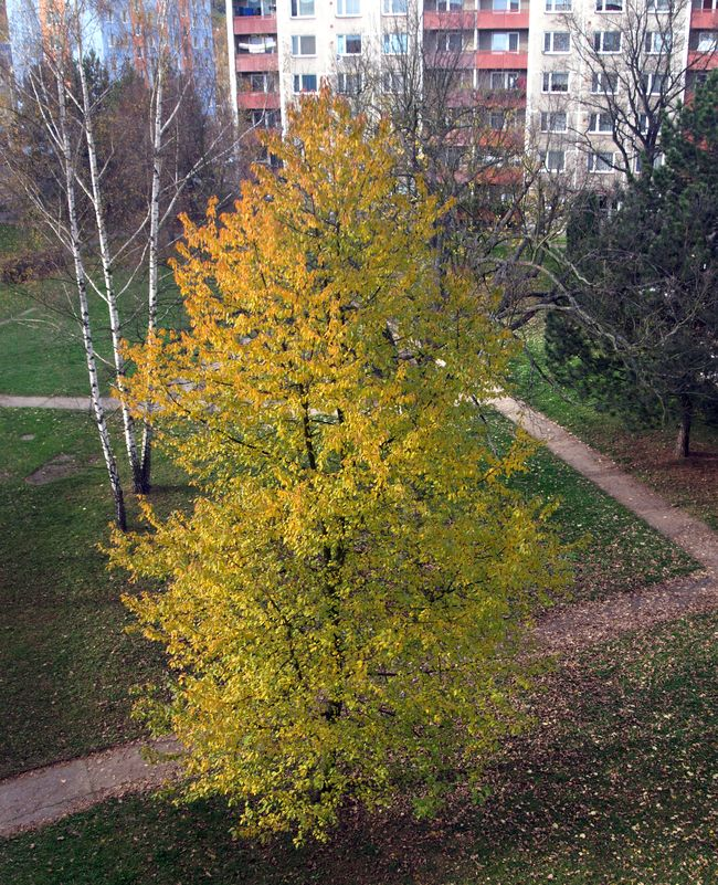 Strom-podz.jpg