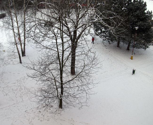 strom-zima2.jpg