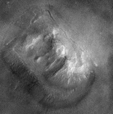 tvarcydonia1.jpg