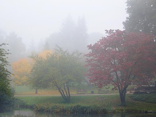 fog_autumn