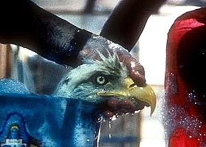 eagle_wash_Exxon_Valdez_89.jpg