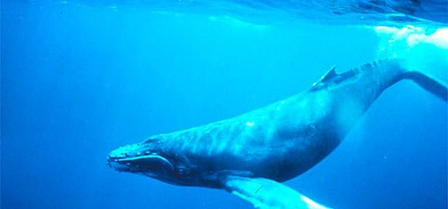 velryba.jpg