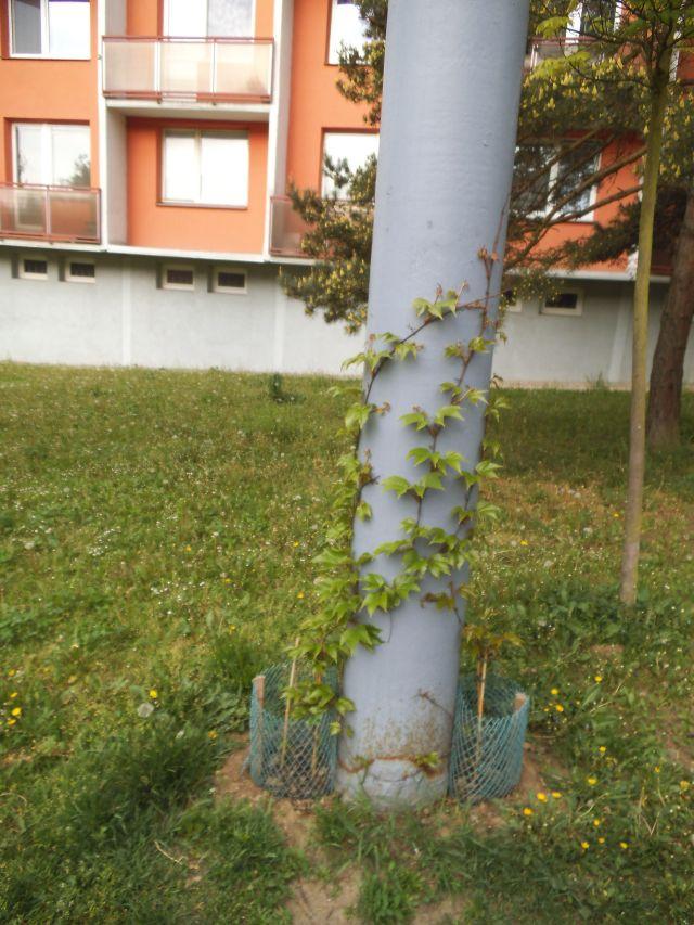 Další zelený stožár