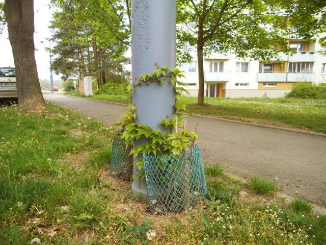 Pěkně zelený stožár 2