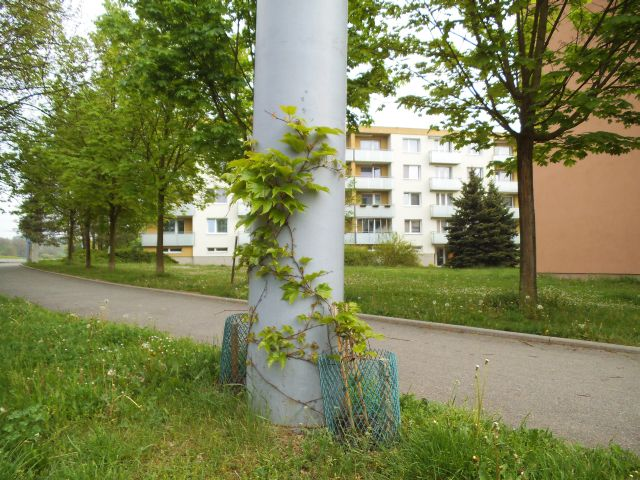 Pěkně zelený stožár 3