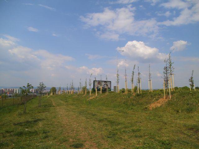 Hradba stromů