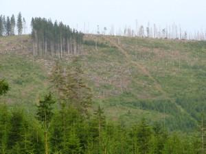 Pohled na člověkem vykácený les na české straně