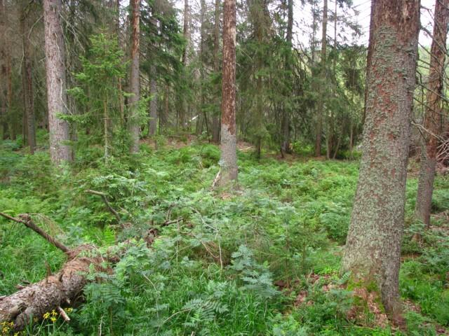 Obrozující se les u pramenů vltavy