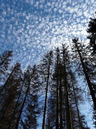 Pohled do nebes přes suché stromy