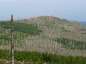Pohled na uschlý les na německé straně